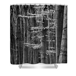 Winter Beech Shower Curtain by Inge Riis McDonald