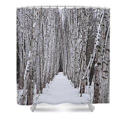 Winter Birch Path Shower Curtain