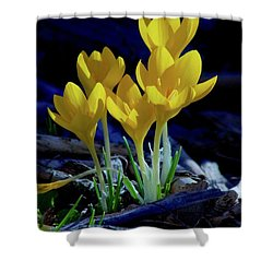 Winter Bloom Shower Curtain