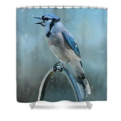Winter Blue Jay Square Shower Curtain