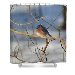 Winter Bluebird Art Shower Curtain