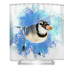 Shower Curtain featuring the photograph Winter Bluejay by Darren Fisher