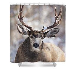 Winter Buck II Shower Curtain