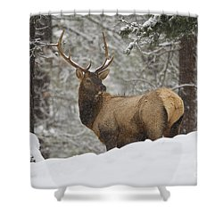 Winter Bull Shower Curtain