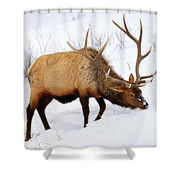 Winter Bull Shower Curtain