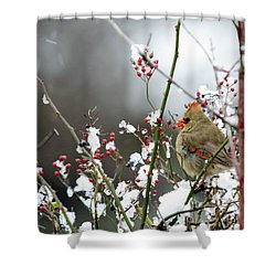 Shower Curtain featuring the photograph Winter Cardinal by Gary Wightman