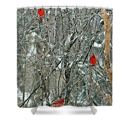 Winter Cardinals Shower Curtain