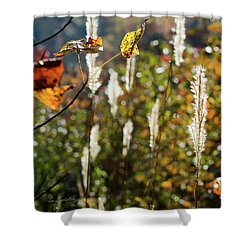Shower Curtain featuring the photograph Winter Color by George Randy Bass