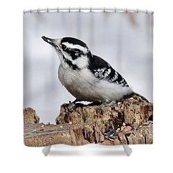 Winter Downy Woodpecker Shower Curtain