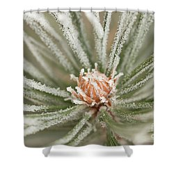 Shower Curtain featuring the photograph Winter Evergreen by Ana V Ramirez