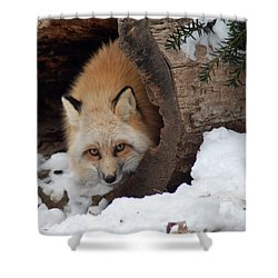 Winter Fox Shower Curtain by Richard Bryce and Family