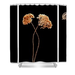Winter Garden Triptych Shower Curtain by Steve Gadomski