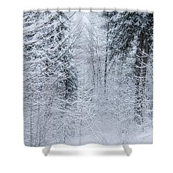 Winter Glow- Shower Curtain