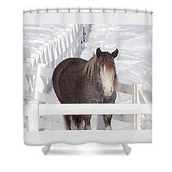 Winter Horse Shower Curtain by Debbie Stahre