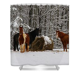 Winter Horses Shower Curtain