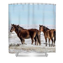 Winter In Sand Wash Basin - Wild Mustangs Shower Curtain