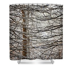 Winter In The Woods Shower Curtain