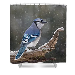 Shower Curtain featuring the photograph Winter Jay by Mircea Costina Photography