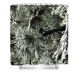Winter Land  Shower Curtain