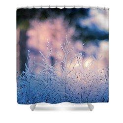 Winter Morning Light Shower Curtain