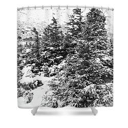 Winter Night Forest M Shower Curtain