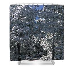 Winter Pathway Shower Curtain by Sandra Bronstein