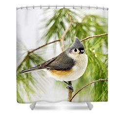 Winter Pine Bird Shower Curtain by Christina Rollo