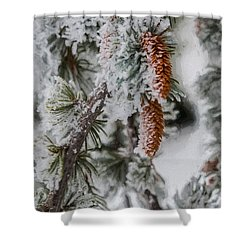 Winter Pine Cones Shower Curtain