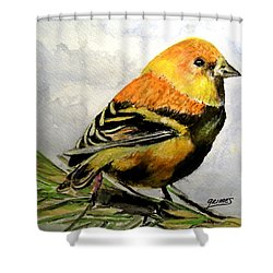 Winter Plumage On Golden Finche Shower Curtain