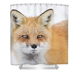 Shower Curtain featuring the photograph Winter Portrait by Mircea Costina Photography