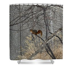 Winter Preparation  Shower Curtain