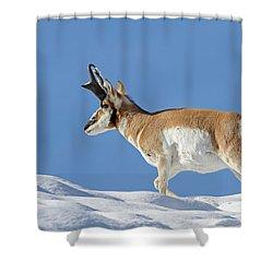 Winter Pronghorn Buck Shower Curtain