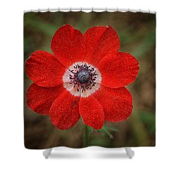 Winter Queen Shower Curtain