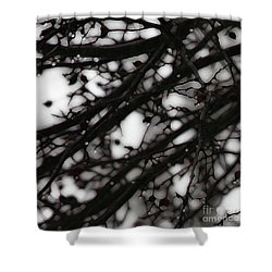 Shower Curtain featuring the photograph Winter Rain - 2 by Linda Shafer