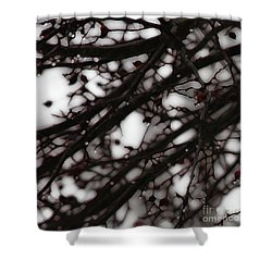 Shower Curtain featuring the photograph Winter Rain - 3 by Linda Shafer