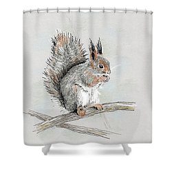 Winter Red Squirrel Shower Curtain