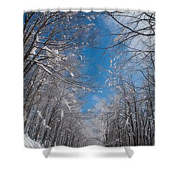 Winter Road Shower Curtain by Evgeni Dinev