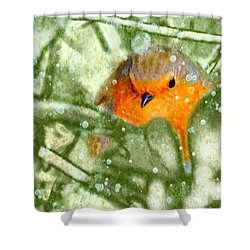 Shower Curtain featuring the photograph Winter Robin by LemonArt Photography
