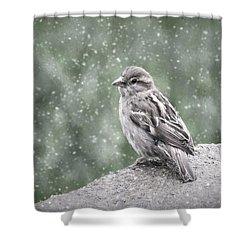 Winter Sparrow Shower Curtain