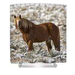 Winter Stallion Shower Curtain by Mitch Shindelbower