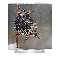 Winter Starling 2 Shower Curtain