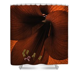 Winter Sunshine Shower Curtain
