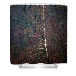 Winter Sycamore Shower Curtain