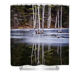 Winter Thaw Relections Shower Curtain by Tom Singleton