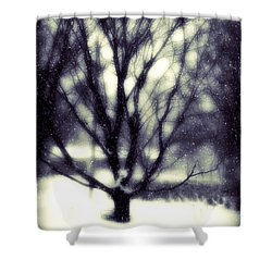 Winter Tree 3 Shower Curtain by Perry Webster