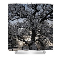 Winter Tree In North Wales Shower Curtain