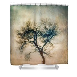 Shower Curtain featuring the photograph Winter Tree by Joye Ardyn Durham