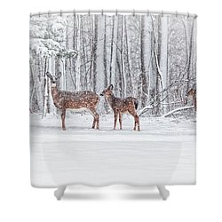 Winter Visits Shower Curtain by Karol Livote