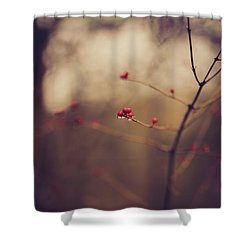 Shower Curtain featuring the photograph Winter Whispers by Shane Holsclaw