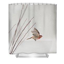 Winter Wind Surfing 1 Shower Curtain